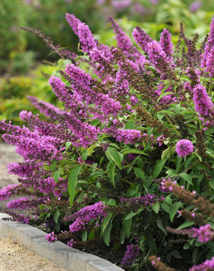 Best Drought Tolerant Plants