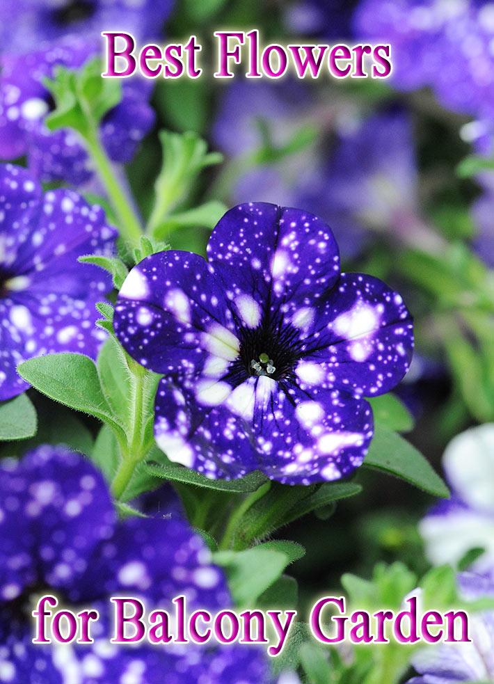 Quiet Corner Best Flowers For Balcony Garden Quiet Corner