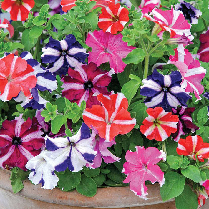 Quiet Corner Container Gardening Ideas: Quiet Corner:Best Flowers For Balcony Garden