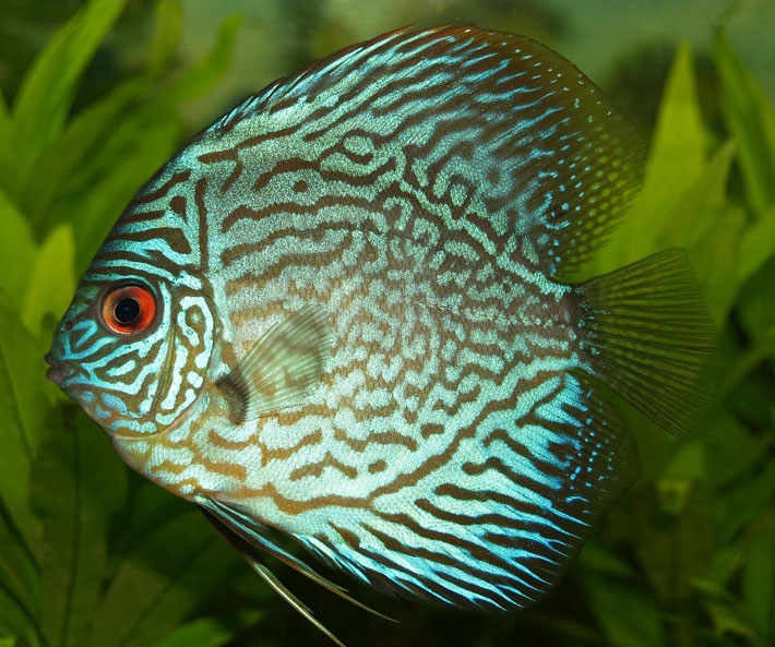 Top 15 Most Beautiful Fish in the World