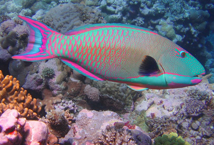 Top-15-Most-Beautiful-Fish-in-the-World