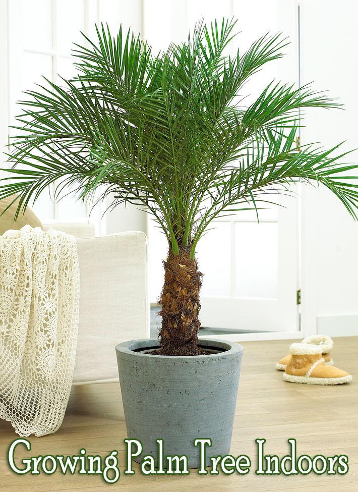 How to Grow Palm Trees Indoors - Quiet Corner