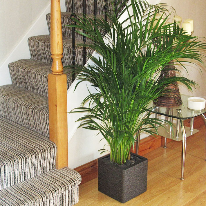 How to Grow Palm Trees Indoors
