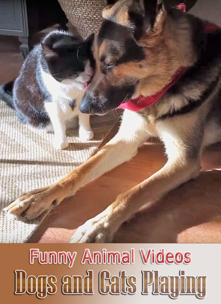 Quiet Corner Funny Animal Videos Archives Quiet Corner