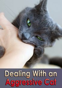 Dealing With an Aggressive Cat