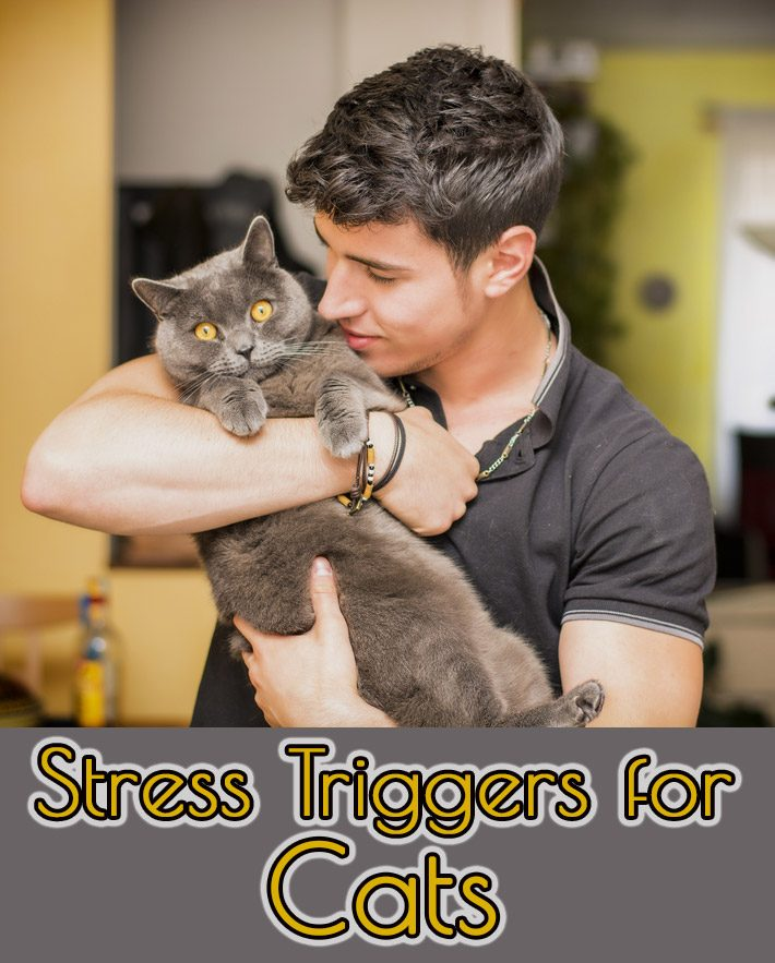 Stress Triggers for Cats