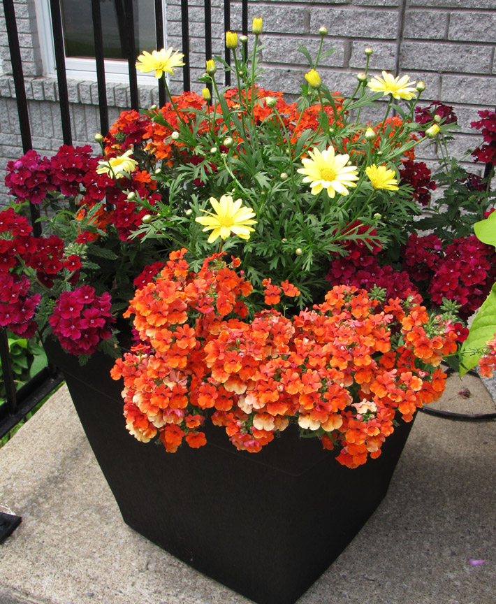 Quiet Corner Container Gardening Ideas: Quiet Corner:Plants For Fall Containers