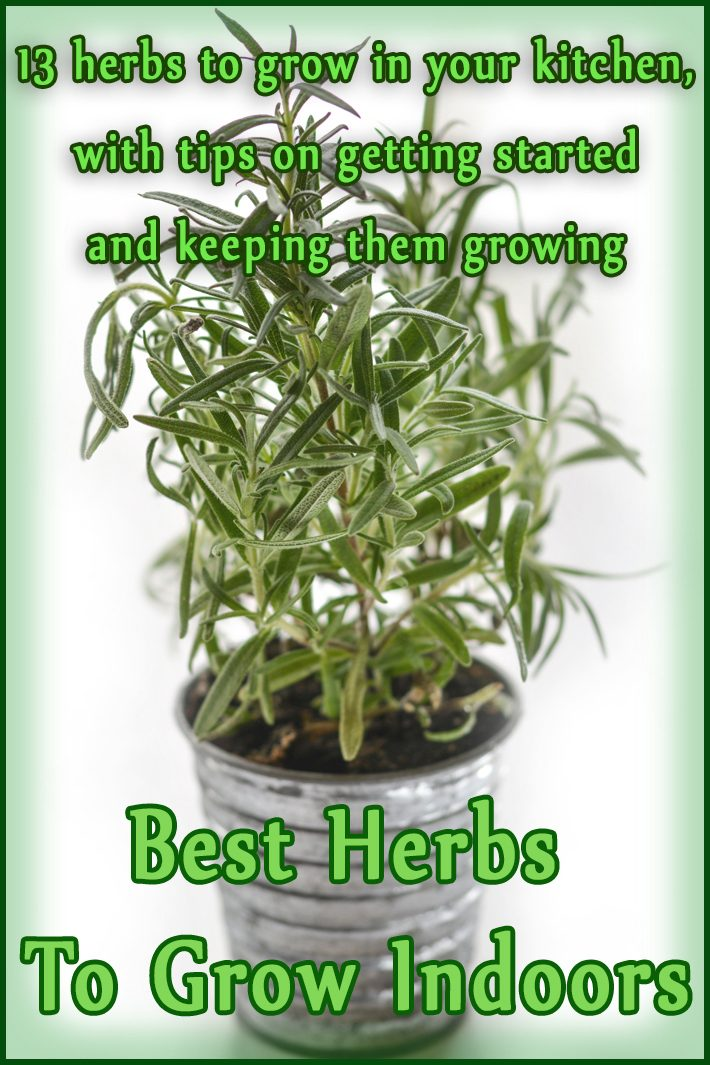 Quiet corner best herbs to grow indoors quiet corner - Best herbs to grow indoors ...