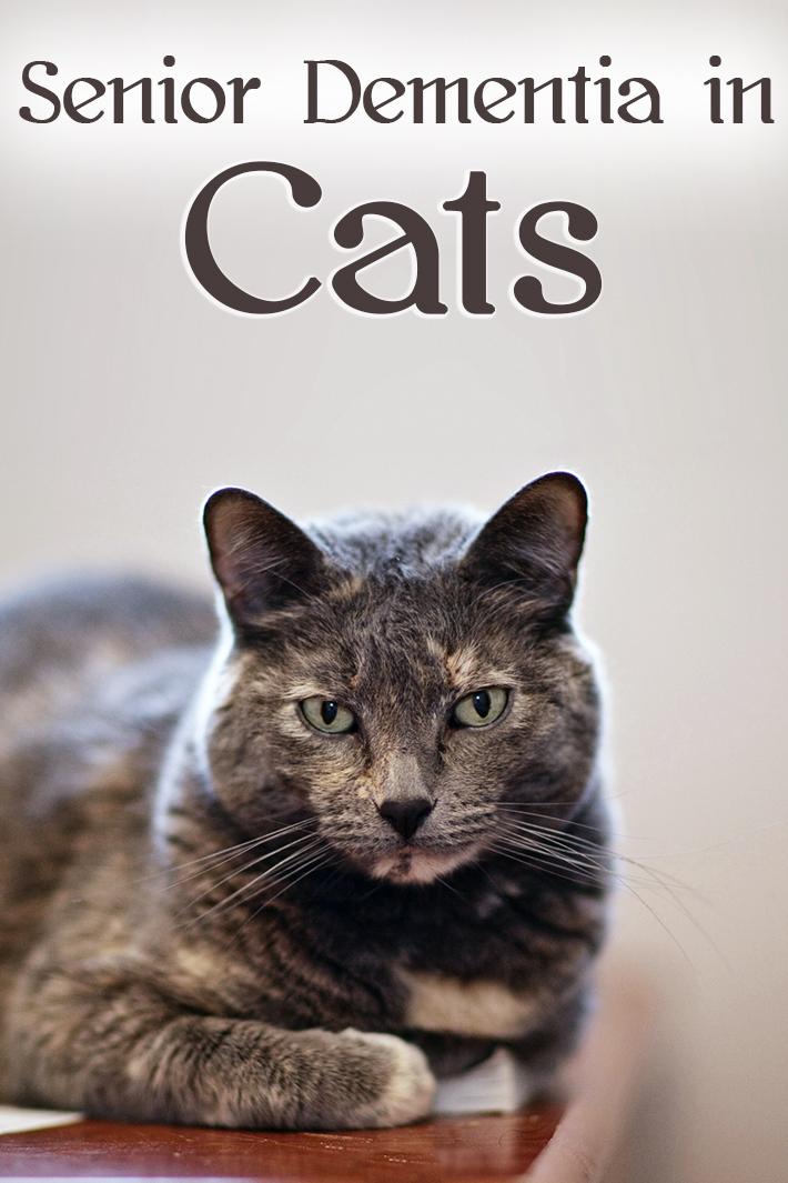 Senior Dementia in Cats - Quiet Corner