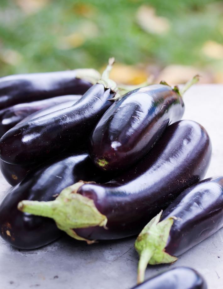 Growing Eggplants