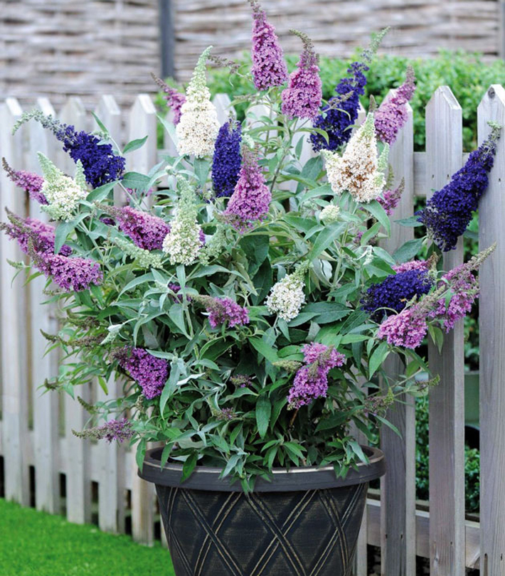 Best Plants for Your Container Garden