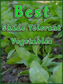 Best Shade Tolerant Vegetables