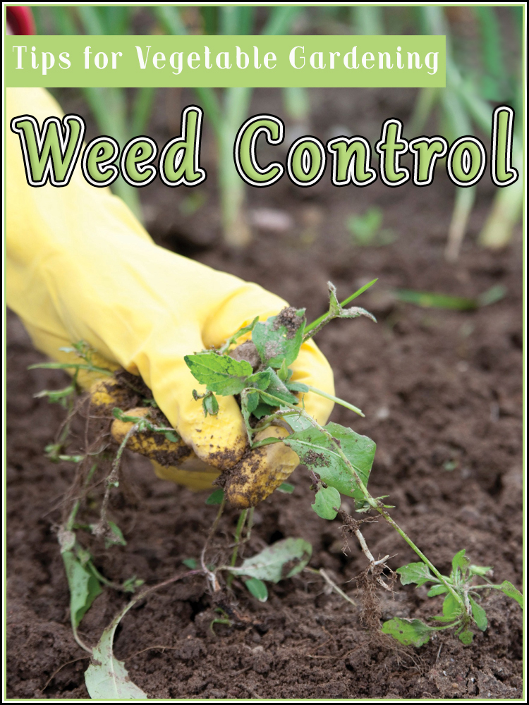 Weed Control Tips For Vegetable Gardening, Weed Control In Vegetable Garden