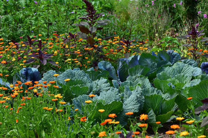 Companion Planting - Key to Successful Garden